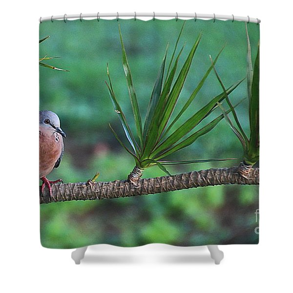 Spotted Dove Shower Curtain by Elizabeth Winter