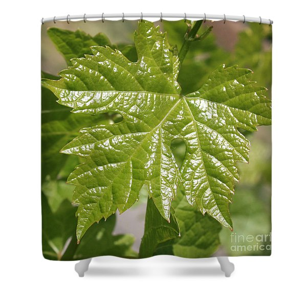 Spring Grape Leaf Shower Curtain by Carol Groenen