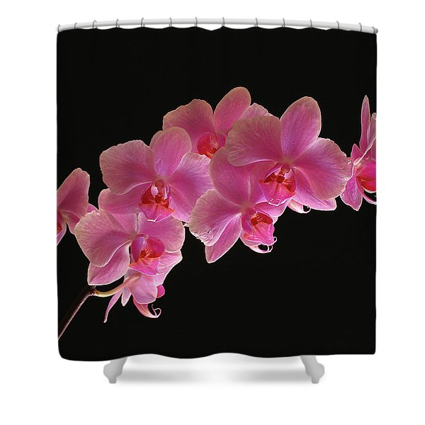 Spring Orchids Shower Curtain by Juergen Roth