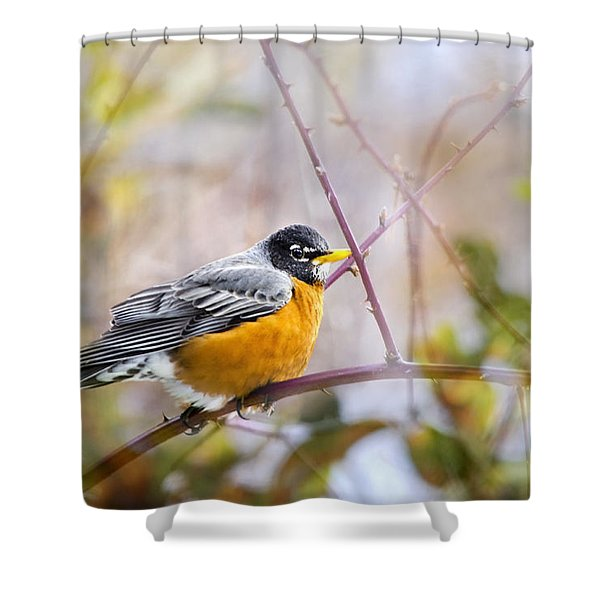 Spring Robin Shower Curtain by Christina Rollo