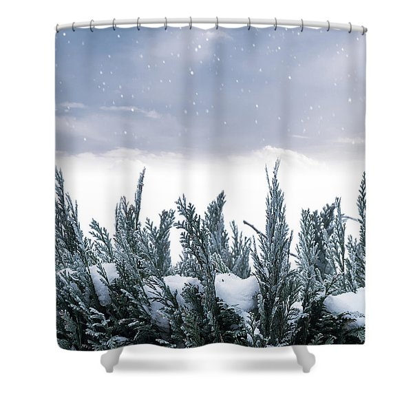 Spruce In Snow Shower Curtain by Wim Lanclus