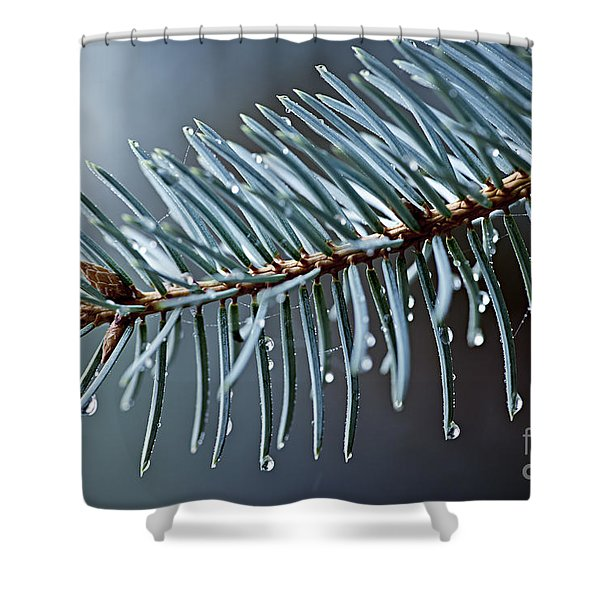 Spruce needles with water drops Shower Curtain by Elena Elisseeva