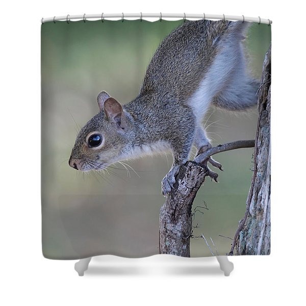 Squirrel Pose Shower Curtain by Deborah Benoit