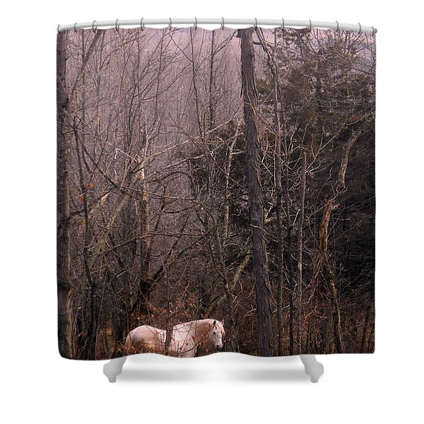 Stallion In The Mountain Pasture Shower Curtain by Patricia Keller