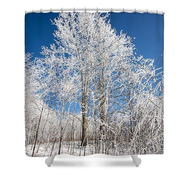 Stand Tall Shower Curtain by John Haldane