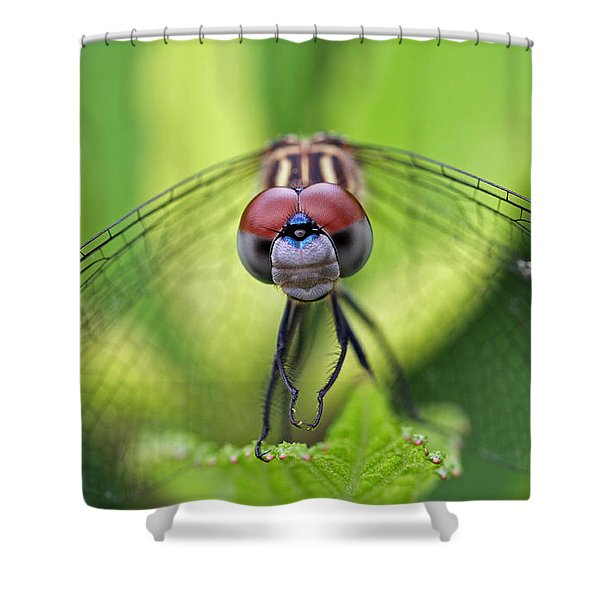 Staring Contest Shower Curtain by Juergen Roth
