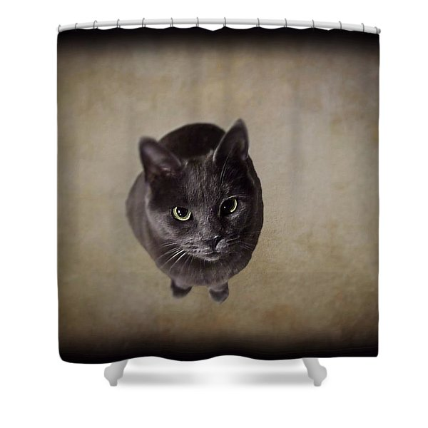 Sterling The Cat Shower Curtain by David Dehner