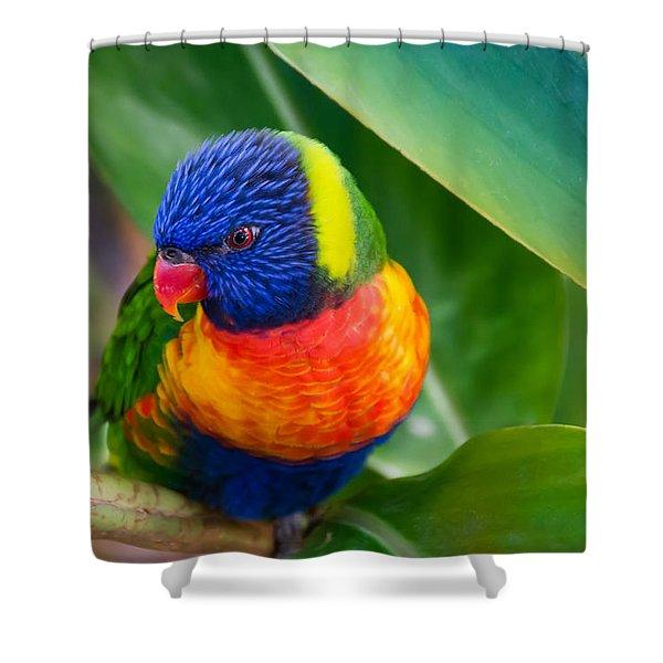 Striking Rainbow Lorakeet Shower Curtain by Penny Lisowski