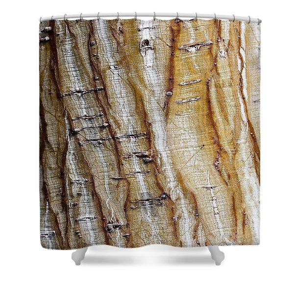 Striped maple Shower Curtain by Steven Ralser