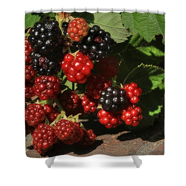 Summer's Bounty Shower Curtain by Donna Kennedy