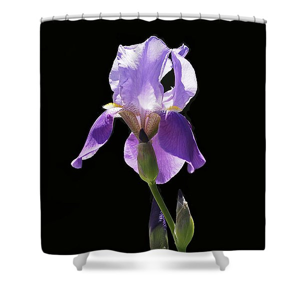 Sun-drenched Iris Shower Curtain by Rona Black