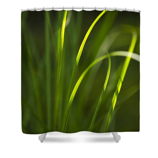 Sun-kissed Grass Shower Curtain by Christina Rollo