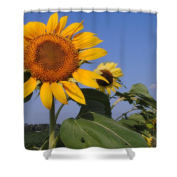 Sunflower Blues Shower Curtain by Frozen in Time Fine Art Photography