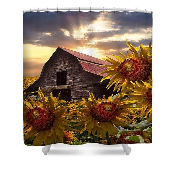 Sunflower Dance Shower Curtain by Debra and Dave Vanderlaan