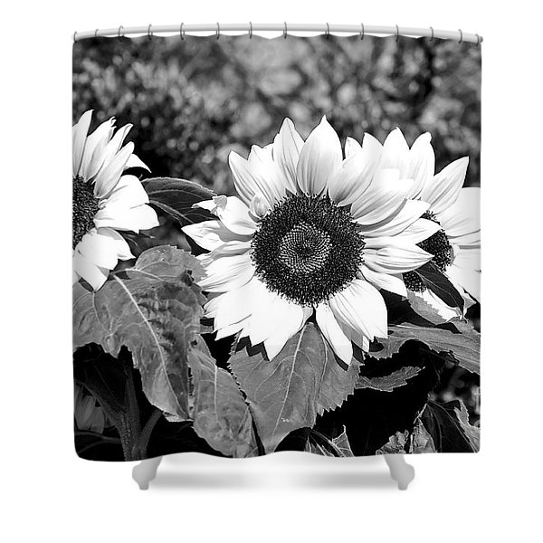 Sunflowers In Black And White Shower Curtain by Kaye Menner