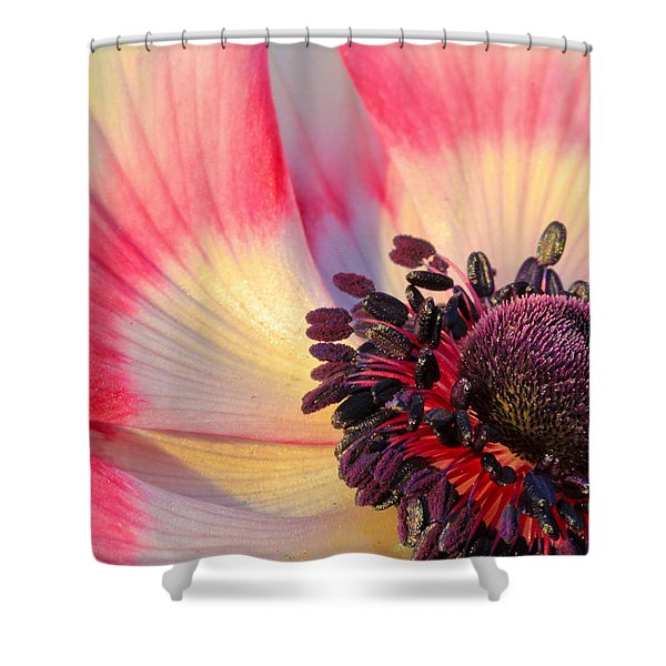 Sunlight Just Right Shower Curtain by Heidi Smith