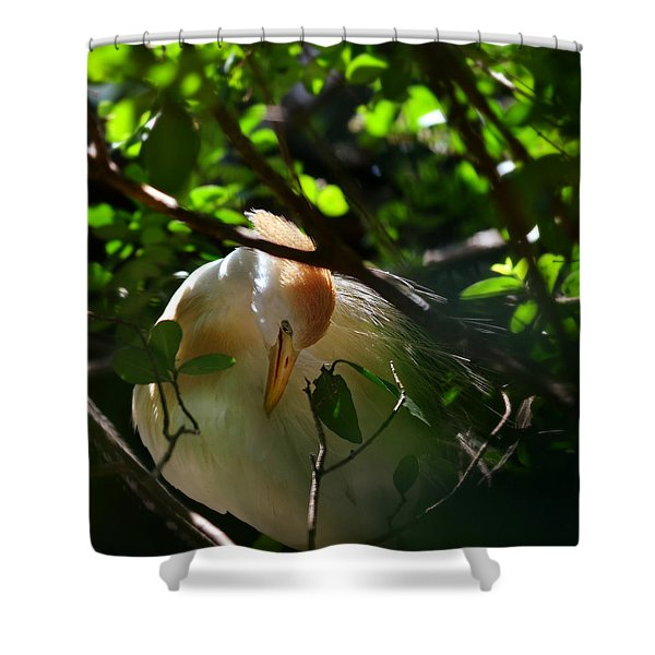 sunlit egret Shower Curtain by Laura  Fasulo