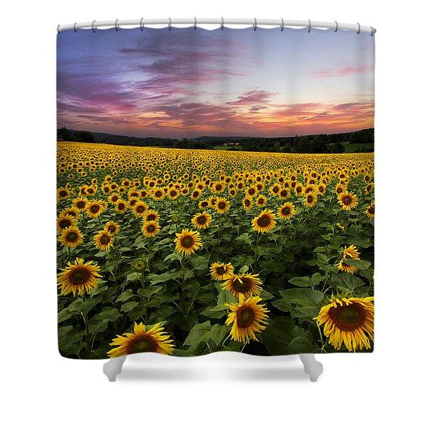 Sunset Sunflowers Shower Curtain by Debra and Dave Vanderlaan