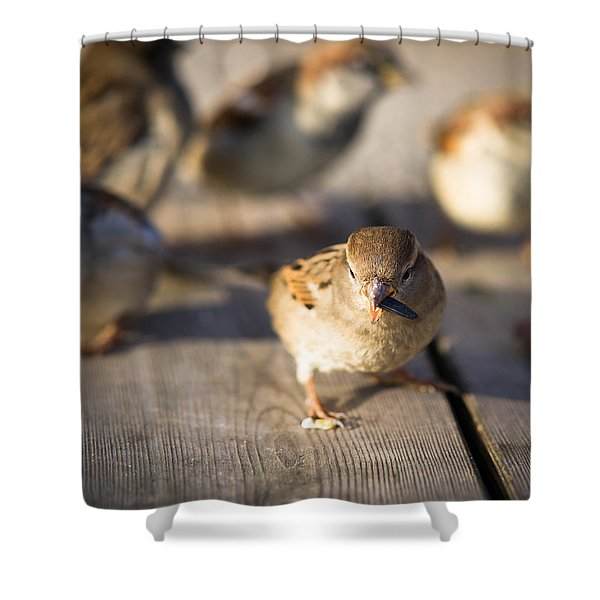 Survival Of The Fittest Shower Curtain by Alexander Senin