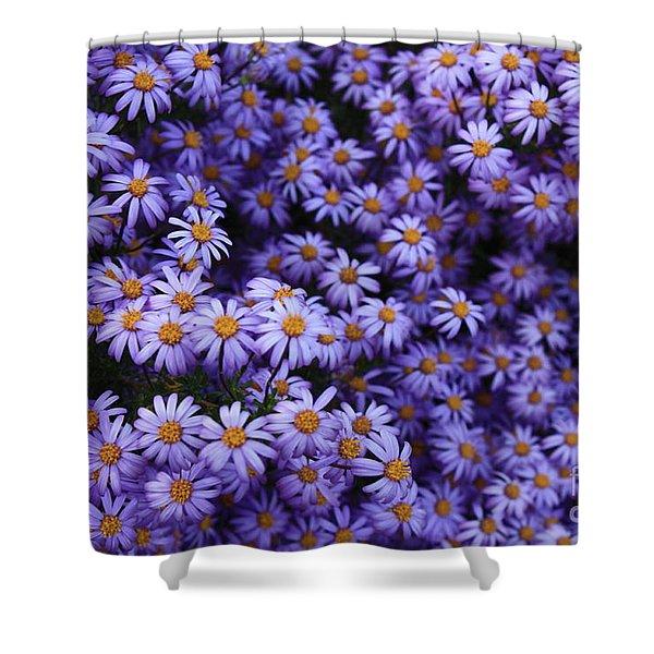 Sweet Dreams Of Purple Daisies Shower Curtain by Carol Groenen