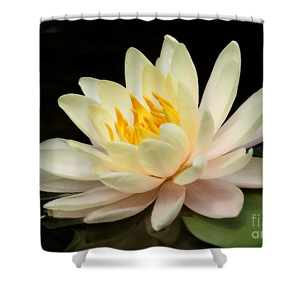 Sweet Peach Water Lily Shower Curtain by Sabrina L Ryan