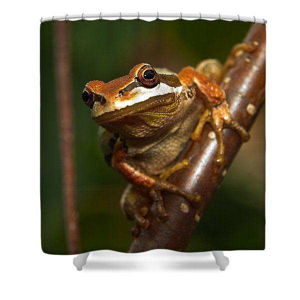 Take the Leap Shower Curtain by Randy Hall