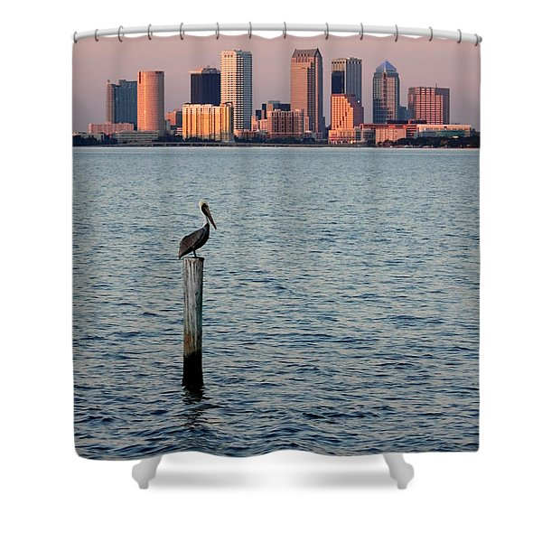 Tampa Skyline And Pelican Shower Curtain by Carol Groenen