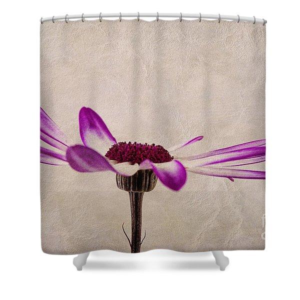 Texturised Senetti pericallis Shower Curtain by John Edwards