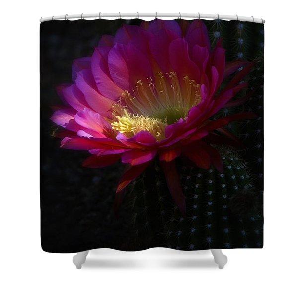 The Beauty Of The Night Shower Curtain by Saija  Lehtonen
