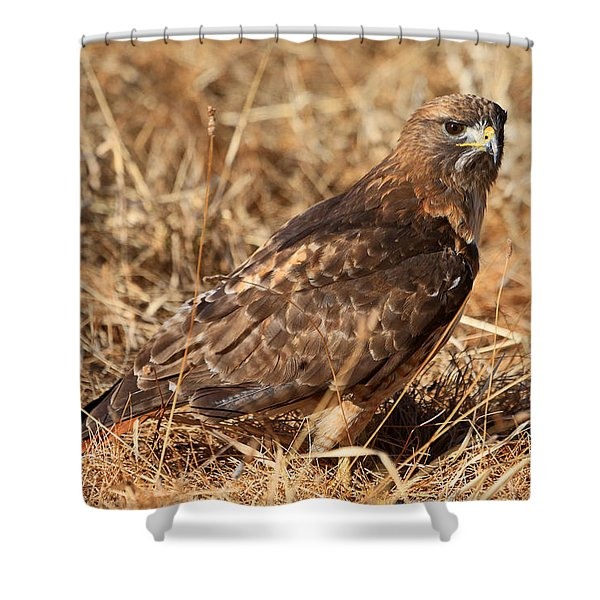 The Hunt 2 Shower Curtain by Donna Kennedy