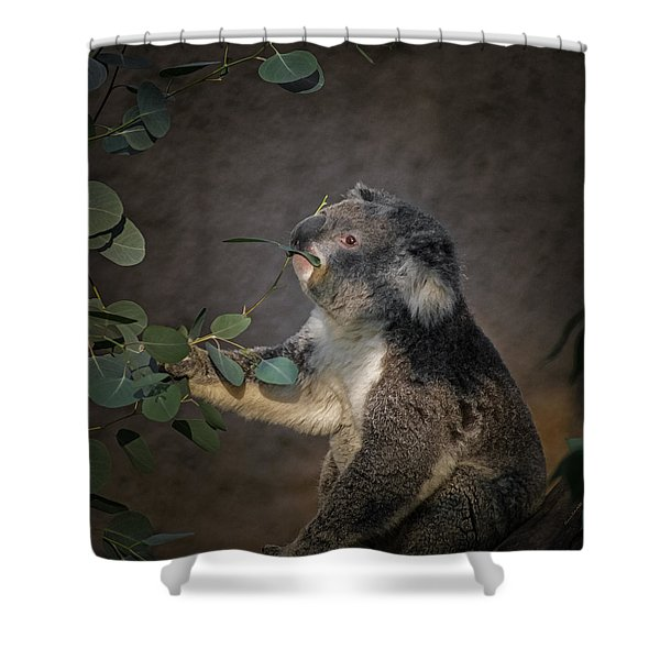 The Koala Shower Curtain by Ernie Echols
