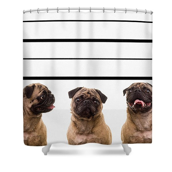 The Line Up Shower Curtain by Edward Fielding