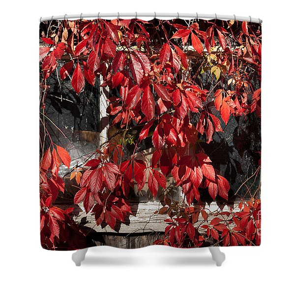 The Old Shed Shower Curtain by John Edwards