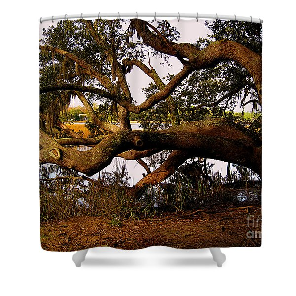 The Old Tree at the Ashley River in Charleston Shower Curtain by Susanne Van Hulst