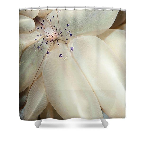 The Rare Colemans Coral Shrimp Shower Curtain by Steve Jones