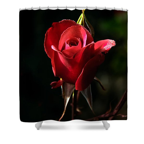The Red Rode Bud Shower Curtain by Robert Bales