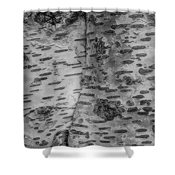 The Trees Have Eyes Shower Curtain by Heidi Smith
