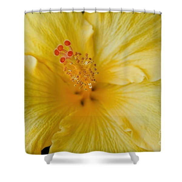 The Whispers Of Heaven Shower Curtain by Sharon Mau