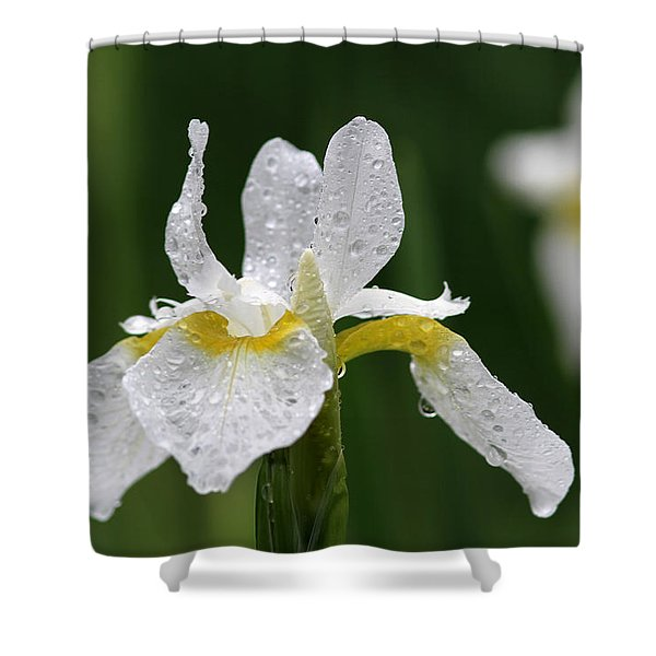 The White Iris Shower Curtain by Juergen Roth
