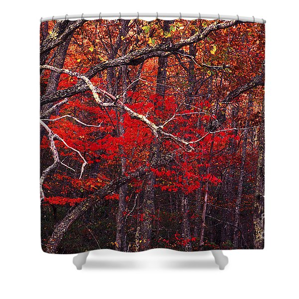 The Woods Aflame In Red Shower Curtain by Paul W Faust -  Impressions of Light