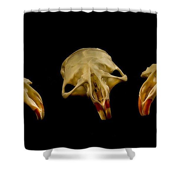Three Blind MIce Shower Curtain by Jean Noren