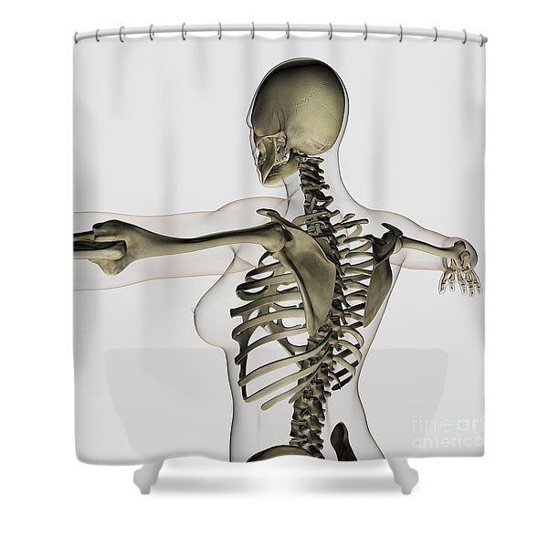 Three Dimensional View Of Female Upper Shower Curtain by Stocktrek Images