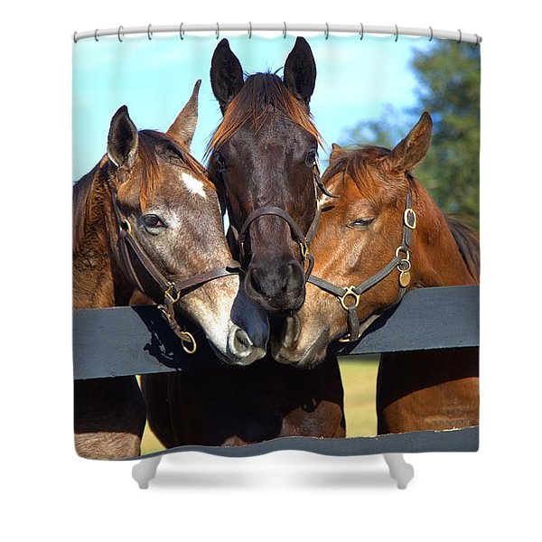 Three Friends Shower Curtain by Gordon Elwell
