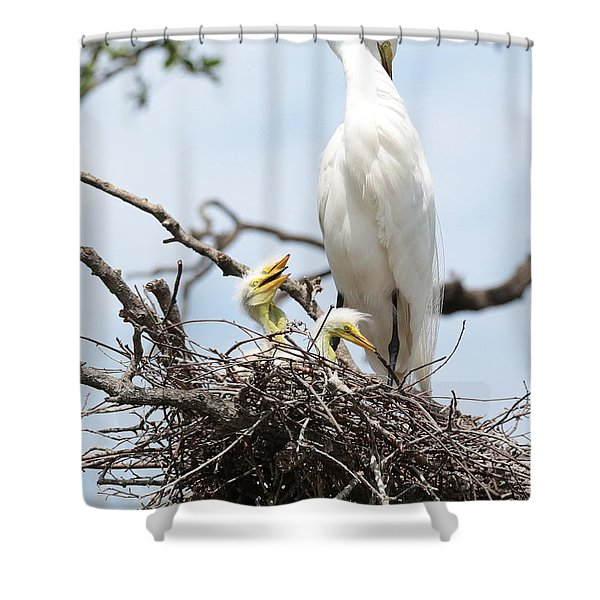 Three Great Egret Chicks in Nest Shower Curtain by Carol Groenen