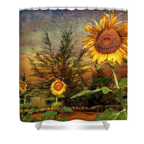 Three Sunflowers Shower Curtain by Adrian Evans