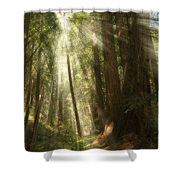 Through the Trees Shower Curtain by Mick Burkey