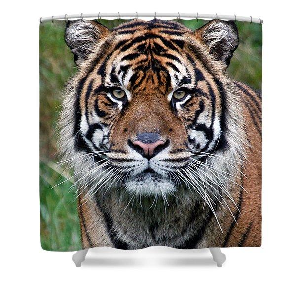 Tiger Shower Curtain by Athena Mckinzie