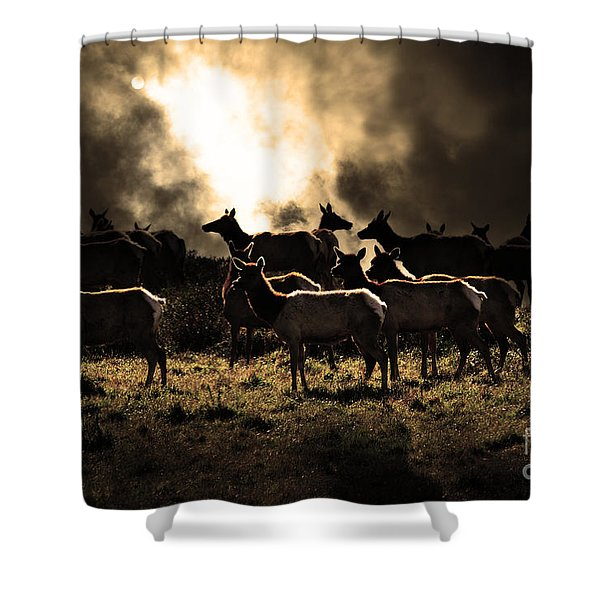 Tomales Bay Harem Under The Midnight Moon - 7D21241 - Sepia Shower Curtain by Wingsdomain Art and Photography