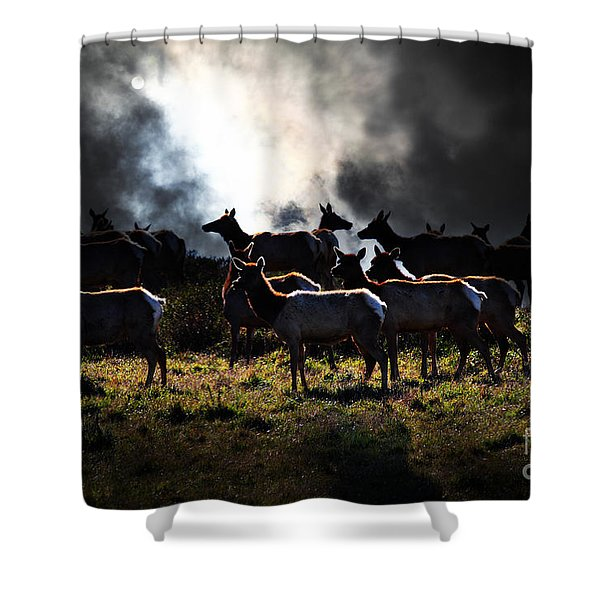 Tomales Bay Harem Under The Midnight Moon - 7D21241 Shower Curtain by Wingsdomain Art and Photography