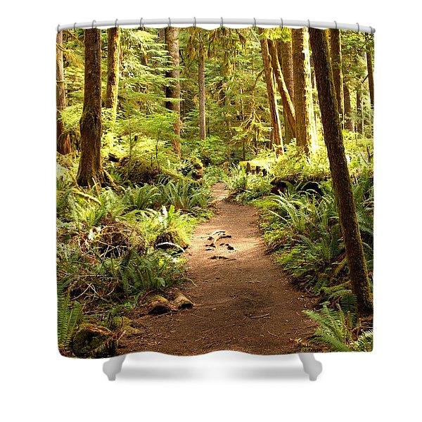 Trail Through The Rainforest Shower Curtain by Carol Groenen